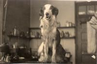 Photograph of dog  in a laboratory